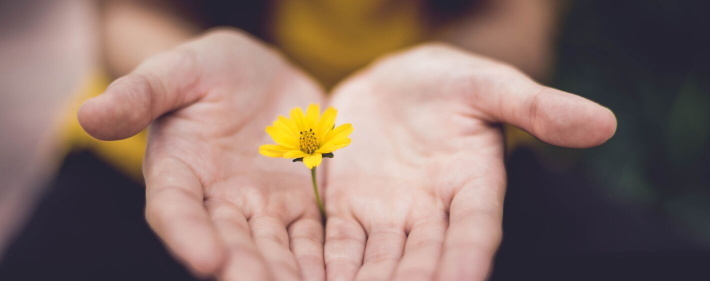 A close up of a person holding a beautiful yellow flower