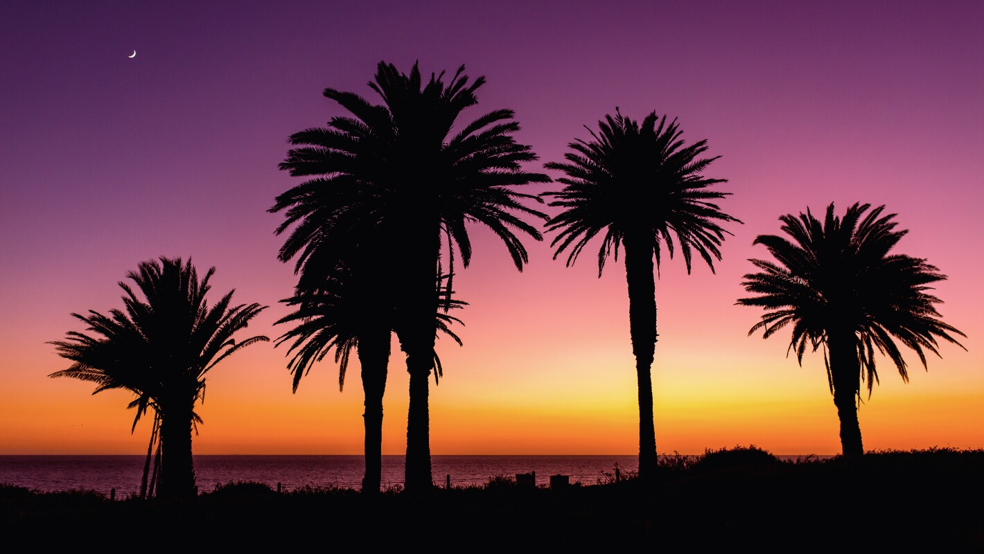 Silhouettes of palm trees by the ocean