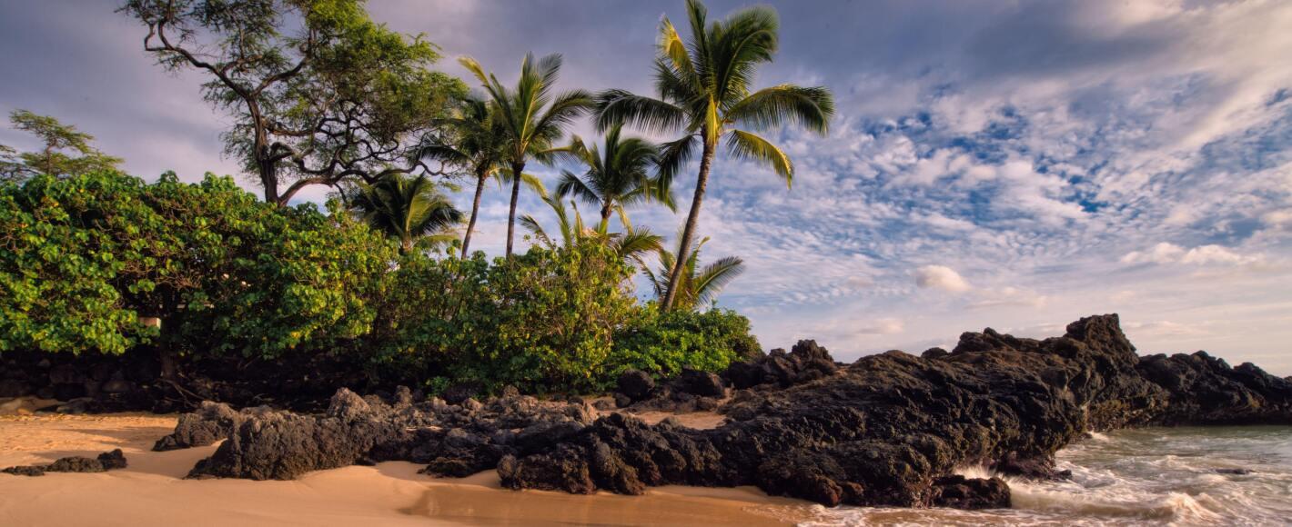 A beautiful Hawaiian beach with palm trees and volcanic rocks