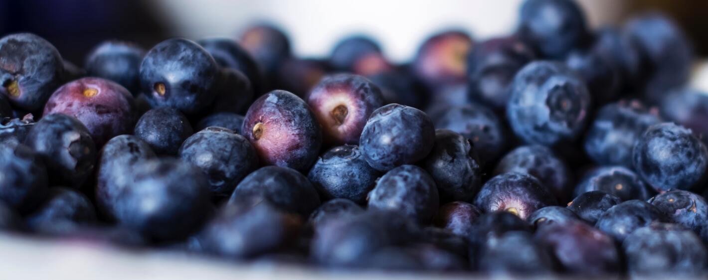 Atlantic blueberries