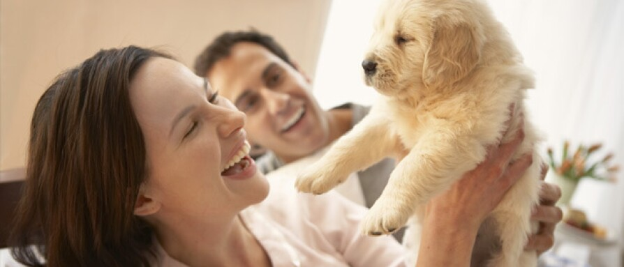 the-4-elements-for-happier-healthier-pets.jpg