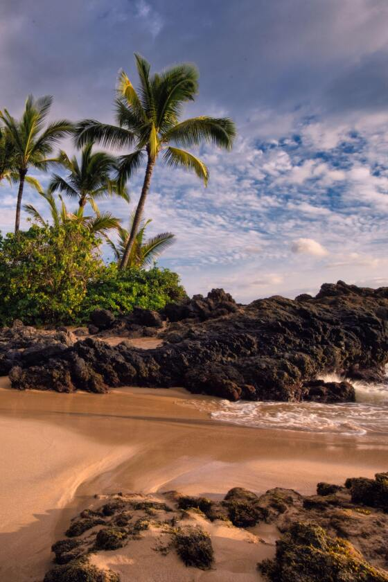 A beautiful Hawaiian beach with palm trees and volcanic rocks