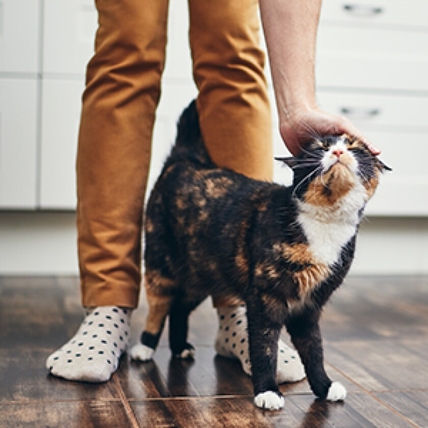 pets-goodlistener.jpg