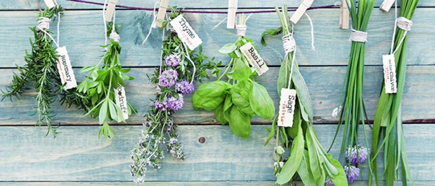how-to-grow-5-ayurvedic-herbs.jpg