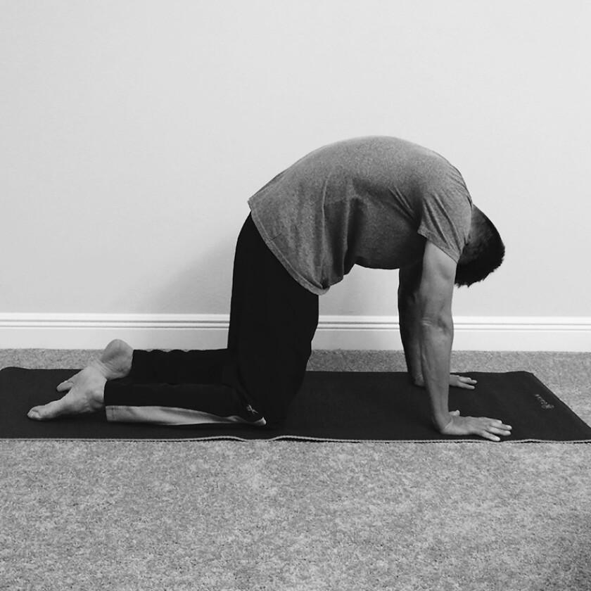 yoga-cat-0.jpg