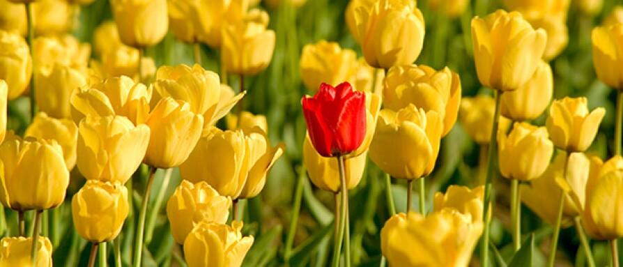 redflowerwithyellowflowers.jpg