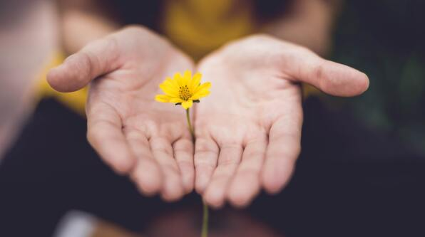 hands together holding yellow flower