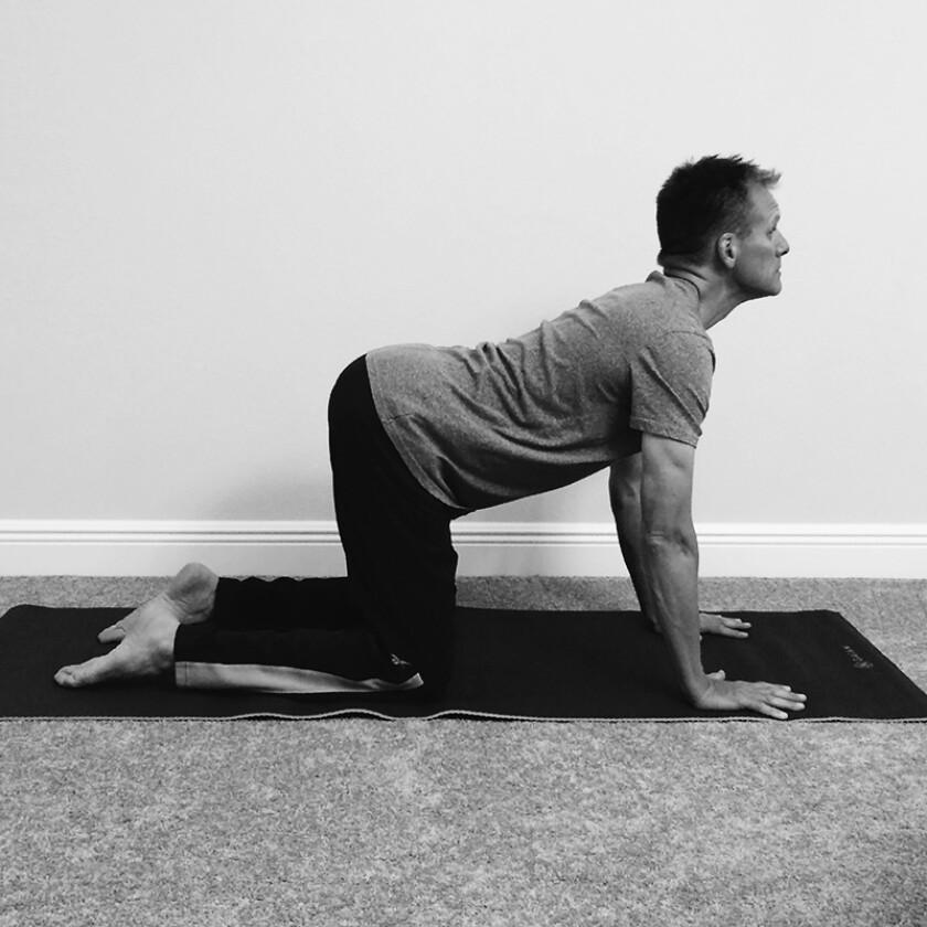 yoga-cow.jpg