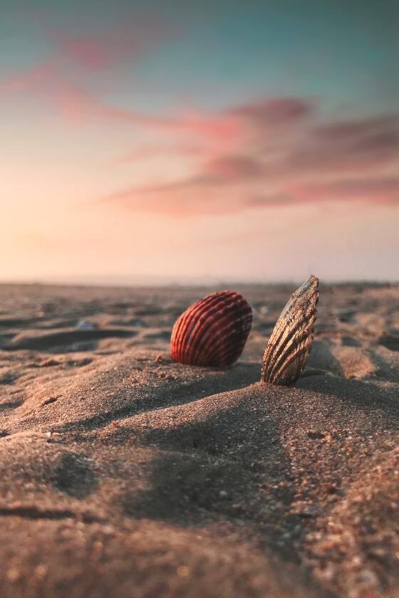 Two sea shells in the sand at sunrise