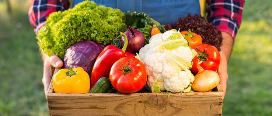 harvest organic farm
