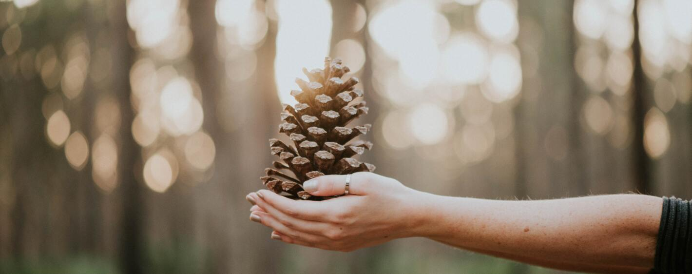 Woman giving a pine cone